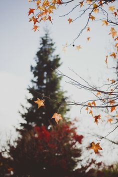 fall: one of my favorite seasons (yes one out of four  I can't pick favorites)