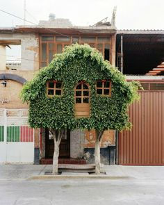 """Photographer Erwan Frichou """"worked with gardeners to create interesting shapes and invited people in the street to climb those peculiar topiary trees"""""""
