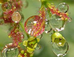 Fotografias de Gotas de Agua!