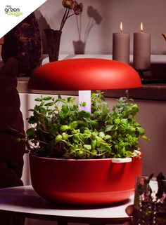 Plantui 6, now in beautiful red! Shop the range at www.mygreenchapter.com, today!