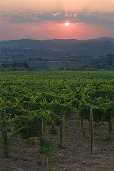 Castello Banfi Montalcino Italy is the perfect place to do a winery tour in southern Tuscany.  They have a restaurant onsite that pairs food with their best wines.  The 5-Course Tasting menu will change your life.