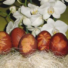 Vajíčka farbené cibuľovými šupkami
