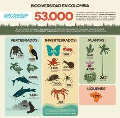 biodiversidad colombiana - Buscar con Google