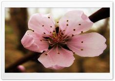 Flower.MR HD Wide Wallpaper for Widescreen