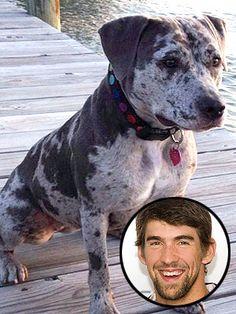 Michael Phelps' rescued Catahoula mix, Stella