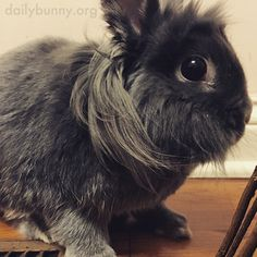 Bunny's fur is business in the front, party in the back - April 4, 2017