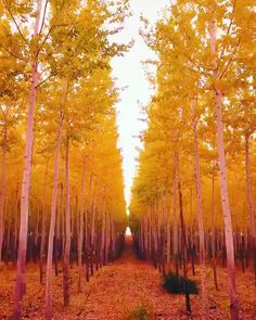 "earthstory: ""Drone calmly floats through a tree farm in the autumn, Pacific Northwest "" Winter Wallpaper, Beach Wallpaper, Beautiful Nature Wallpaper, Beautiful Landscapes, Autumn Scenes, Autumn Nature, Autumn Fall, Autumn Photography, Dark Fantasy"