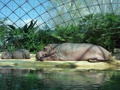 #Berlin zoo