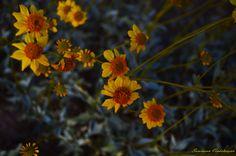 through my Lens - near Lake Mead, Nevada