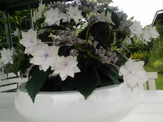Summer house, white flowers