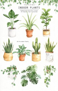 Indoor Plants Watercolor Clipart by everysunsun on @creativemarket