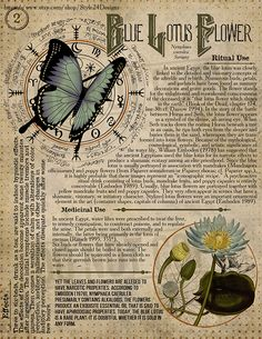 Blue Lotus Flower Book of Shadows page, Ritual Poisonous Plants Blue Lotus Flower Book of Shad Magic Herbs, Herbal Magic, Witch Spell Book, Hogwarts, Blue Lotus Flower, Witchcraft For Beginners, Poisonous Plants, Wiccan, Pagan Witchcraft