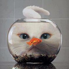 #Cats #Cat #Kittens #Kitten #Kitty #Pets #Pet #Meow #Moe #CuteCats #CuteCat #CuteKittens #CuteKitten #MeowMoe Dinner? ... http://www.meowmoe.com/5852/