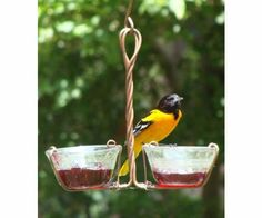 Two Cup Jelly Feeder (Bird Feeders) (Fruit and Jelly Feeders)