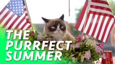 "Grumpy Cat & Friends Star in ""Cat Summer"" Music Video for Charity"