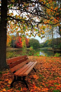 Empty Bench by Musta mother nature moments