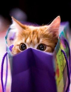 .in a purple bag no less
