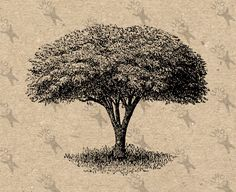 Vintage Image Garden tree Decorative tree Instant Download Digital printable graphic for t-shirt pillows tote tea towels lampshade HQ 300dpi by UnoPrint on Etsy