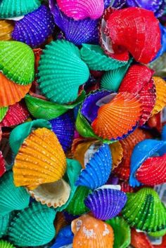 Colorfully Painted Shells.