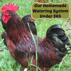 Our Homemade Watering System Under $65 Dollars ~