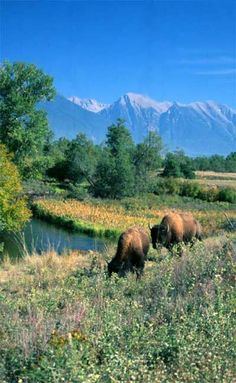 National Bison Range in Western Montana's Glacier Country