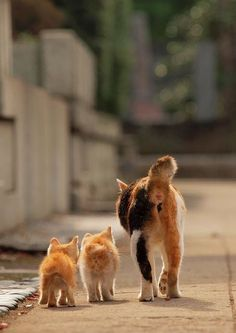 Stroll with Mom...oh my! Sooo cute