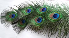 Peacock FeathersFive All Seeing Eye Feathers by CherylsGoodStuff