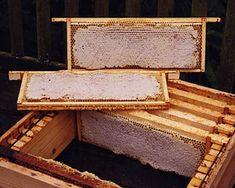 beekeeping - Google Search