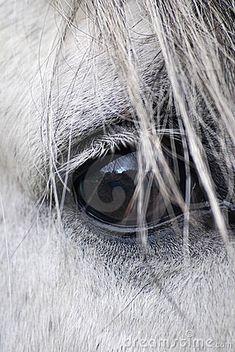 Horse eye by Philcold, via Dreamstime