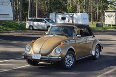 Vw Cabrio, Old Bug, Beetle Convertible, Volkswagen Beetles, Beetle Bug, Cute Cars, Bugs, Antique Cars, Porsche