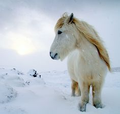so cute! i love ponies. and horses. and dogs. and pizza. and netflix. and---i digress.