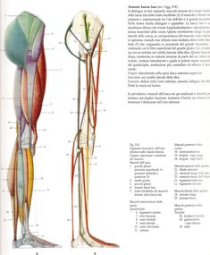 buttocks and legs lateral