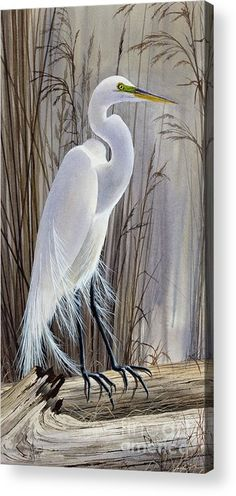 Egrets Beauty Acrylic Print by James Williamson. All acrylic prints are professionally printed, packaged, and shipped within 3 - 4 business days and delivered ready-to-hang on your wall. Choose from multiple sizes and mounting options. Bird Paintings On Canvas, Bird Painting Acrylic, Acrylic Canvas, Painting On Wood, Watercolor Paintings, Original Paintings, Canvas Art, Canvas Prints, Art Prints