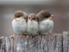 birds huddled together