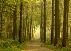 Path through Golden Forest - Wall Mural & Photo Wallpaper - Photowall