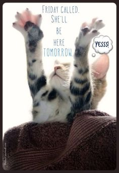 Thursday humor | Cat funny | Cute | Almost Friday | Can't wait for the weekend | One more day!