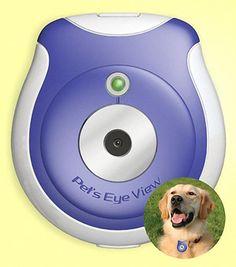 Pet's Eye View Digital Camera