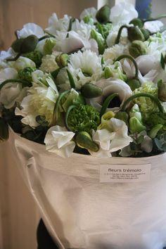 Anemone, Ranunculus, Tulipa , Lathyrus, Papaver •