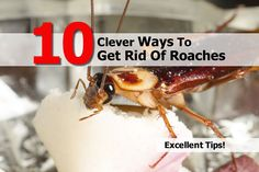 10 Clever Ways To Get Rid Of Roaches - http://top10thebest.com/top-10-best-ways-get-rid-roaches/
