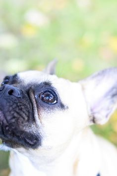 Love me it my best, and at my most stubborn. As I am a Frenchie, I am love:)