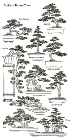Styles & Shapes of Bonsai Trees