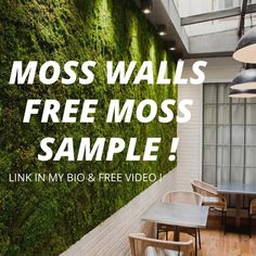 ✳️WATCH THE VIDEO & FREE SAMPLE Money Tree Bonsai, Money Trees, Board Rooms, Diy Crafts Materials, Moss Letters, Moss Decor, Ivy Wall, Washroom Design, Moss Wreath