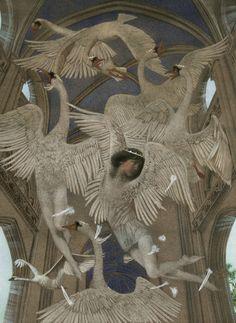 """""""Wild Swans"""" by Nadezhda Illarionova"""