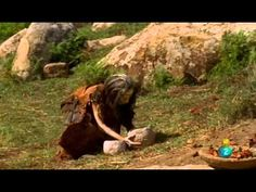 ▶ El Amanecer del Hombre-Epis1-Neolitico- 1 de 4 - YouTube