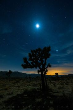 The Moon, Venus, and Jupiter frame a Joshua Tree not long after sunset.