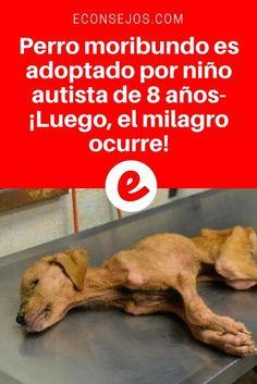 Autista atividades | Perro moribundo es adoptado por niño autista de 8 años- ¡Luego, el milagro ocurre! | Cómo la amistad de un cachorro puede cambiarlo todo- ¡Tienen que verlo!