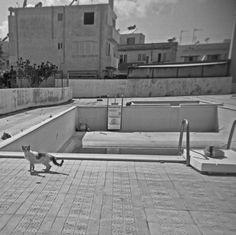 Pool Cat. Kos, Greece.  © Chris Trew / Plastic Cameras 2012
