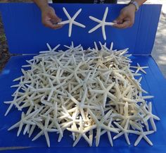 Craft Shells 3120: 200 Pc Lot White Pencil Finger Starfish 4 To 6 Inch Wedding Seashells #6595-S -> BUY IT NOW ONLY: $74.99 on eBay!