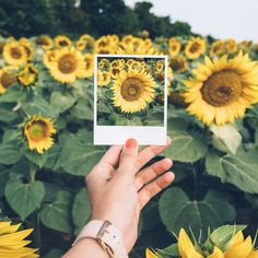 Pinterest: Aurora Lovegood