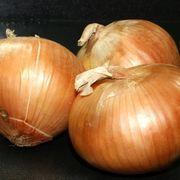 Onions are ideally suited for container gardening. Even a 6- to 10-inch container is large enough to get started, and can fit easily on a balcony or doorstep.  Growing onions in containers is a perfect solution for space-challenged gardeners. As an added bonus, container gardening is easy on sore knees and backs as very little bending and stooping...